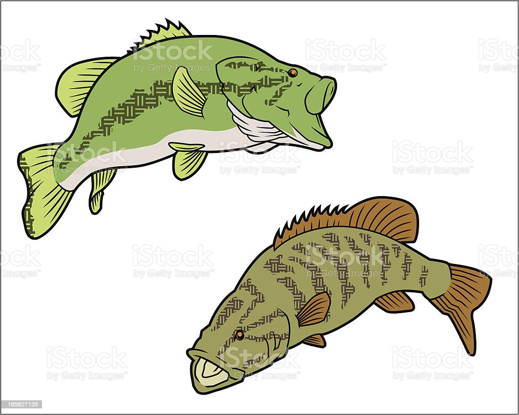 Largemouth and Smallmouth Bass vector art illustration