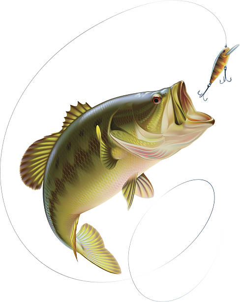 Largemouth bass catching a bait Largemouth bass is jumping to catch a bait. Layered vector illustration. jumping stock illustrations