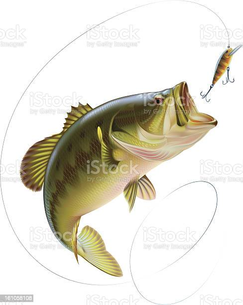 Largemouth bass is jumping to catch a bait. Layered vector illustration.