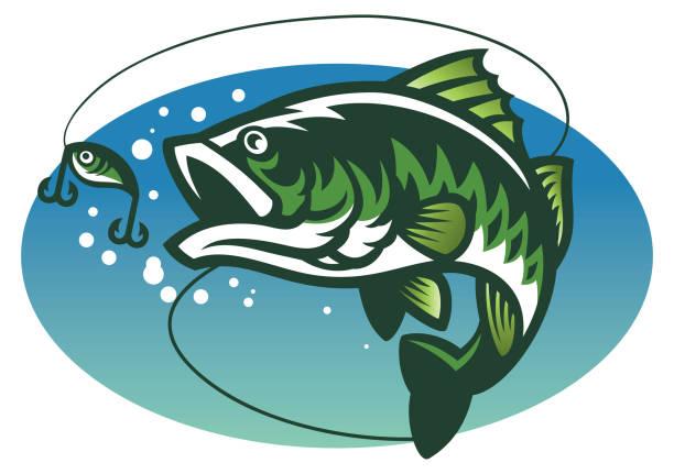ilustraciones, imágenes clip art, dibujos animados e iconos de stock de lobina pez mascota - pesca