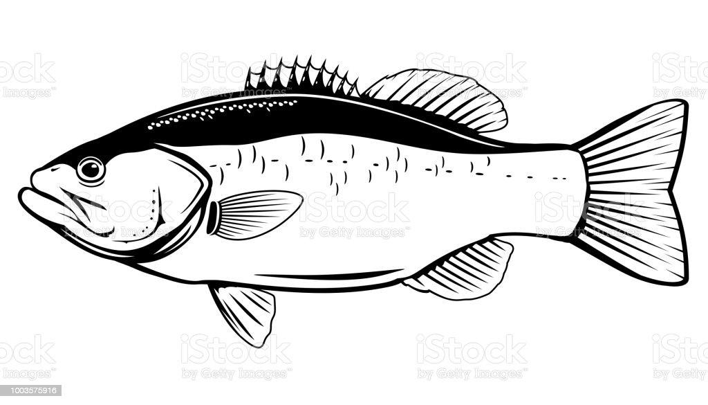 Ilustración de Pesca De Lobina y más banco de imágenes de Agua dulce ...