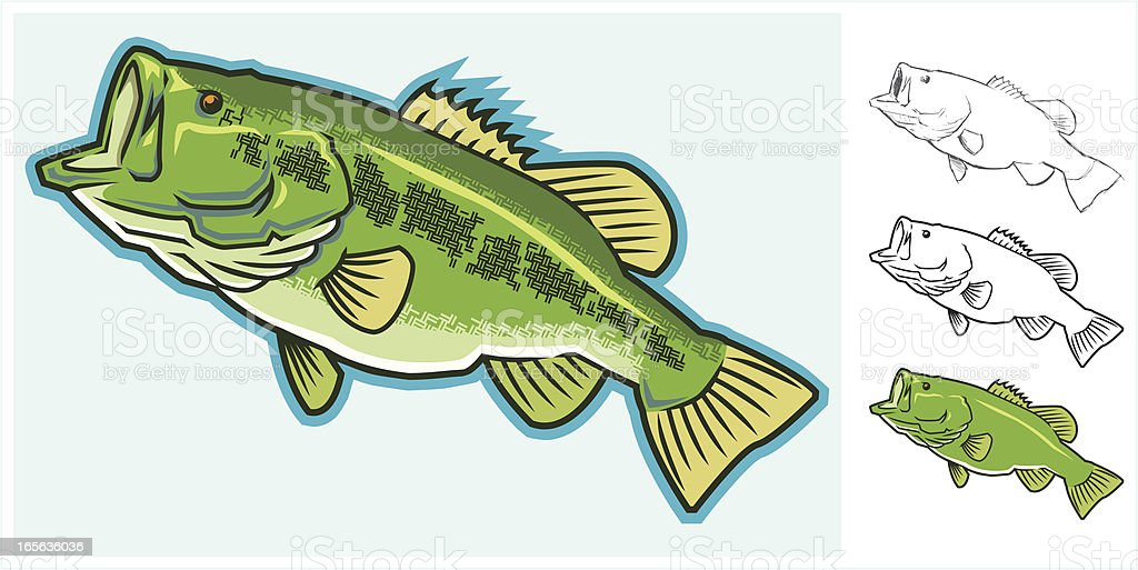 Largemouth Bass - From Sketch to Full Color royalty-free largemouth bass from sketch to full color stock vector art & more images of animal