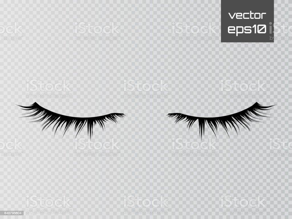 Lashes isolated on transparent background. False eyelashes set. Vector vector art illustration