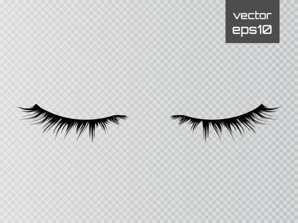 透明背景上孤立的睫毛。假睫毛設置。向量 - 睫毛 幅插畫檔、美工圖案、卡通及圖標