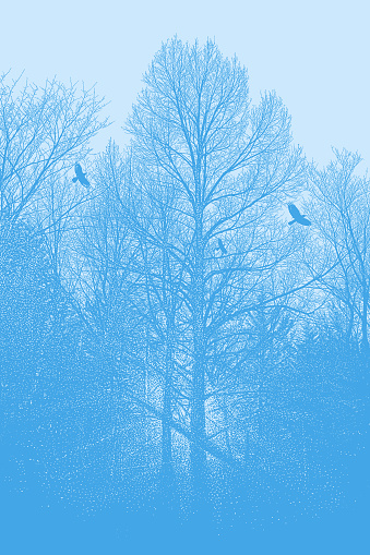 Late autumn trees and raven