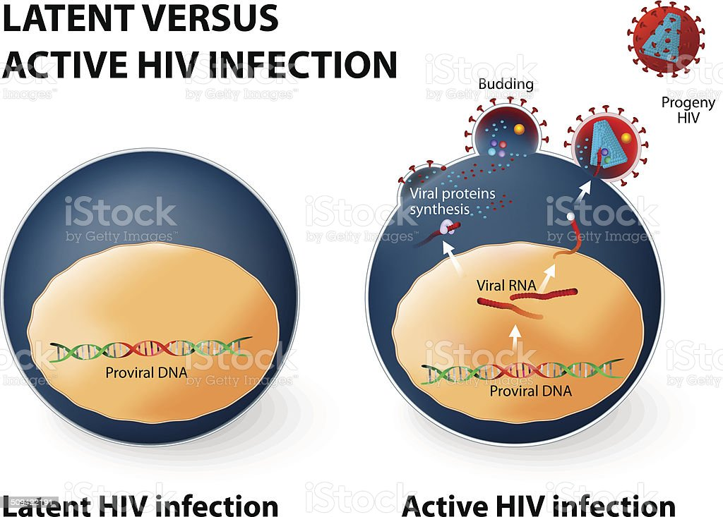 Latent and active HIV infection vector art illustration