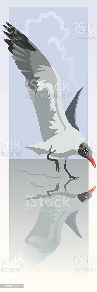 Laughing Gull Landing royalty-free laughing gull landing stock vector art & more images of animal