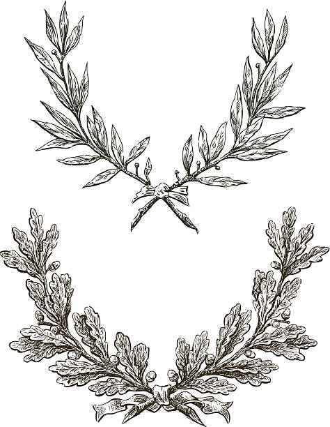 Laurel and oak branches Vector drawing triumphal branches of laurel and oak. bay tree stock illustrations