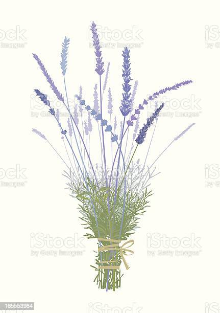 Lavender boquetdesign elements vector id165553984?b=1&k=6&m=165553984&s=612x612&h= 6ydepckqjopaifuastq4dnhjoybu o4d7zb f4iuem=