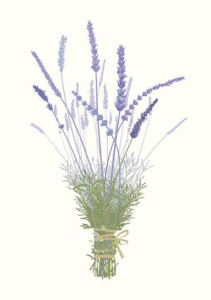 Lavender Boquet-Design Elements see more lavender color stock illustrations