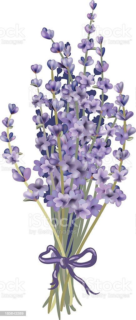 Lavender bouquet vector art illustration