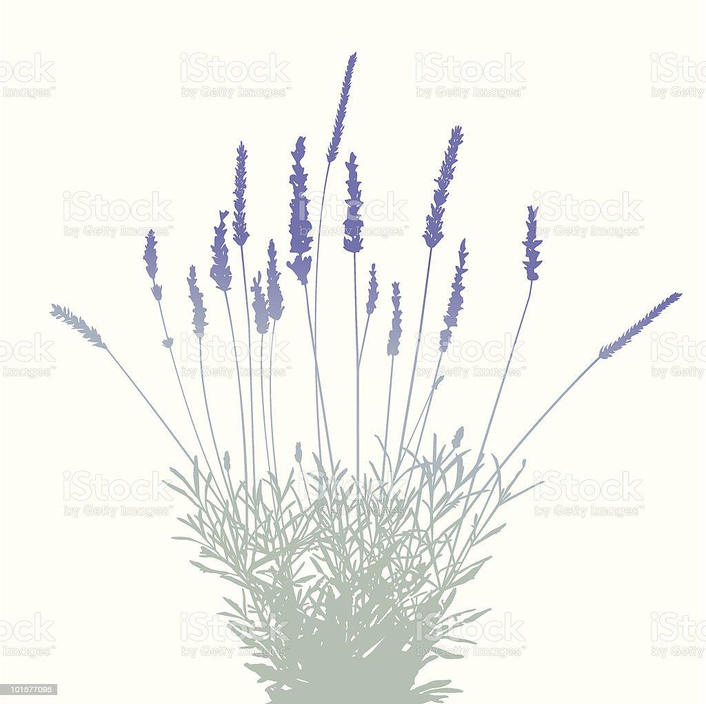 Lavender Bunch-Design Elements vector art illustration