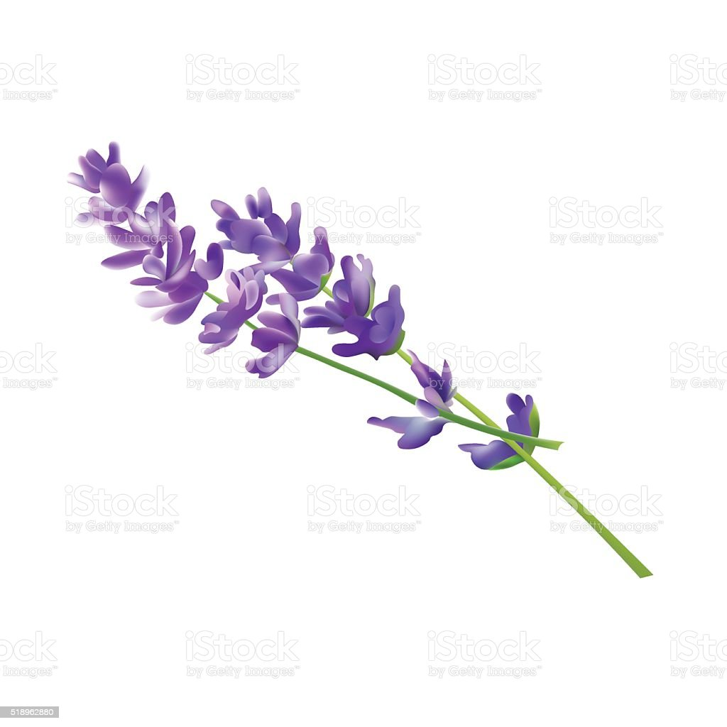 royalty free lavender clip art vector images