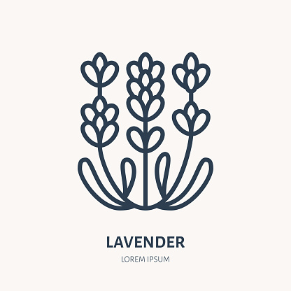 Lavender flower flat line icon. Medicinal plant vector illustration. Thin sign for herbal medicine, essential oil logo