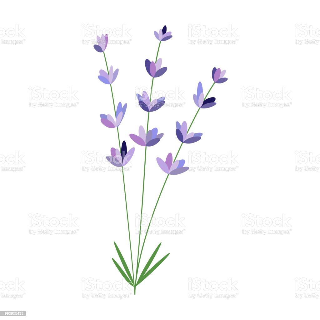 Lavender Flower Vector Packaging Design Template And Emblem