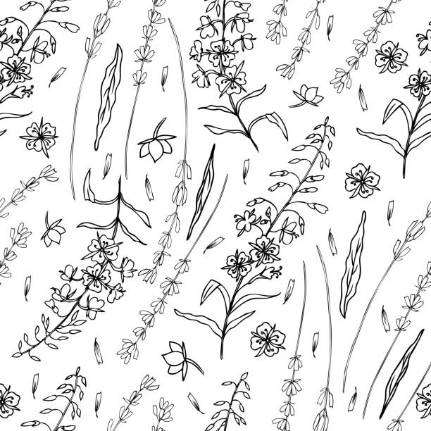 Lavender flowers, Willow herb, Chamerion angustifolium, fireweed, rosebay hand drawn graphic illustration, seamless vector floral pattern, graphic texture, decorative background for package cosmetics Lavender flowers, Willow herb, Chamerion angustifolium, fireweed, rosebay hand drawn graphic illustration, seamless vector floral pattern, graphic texture, decorative background for package cosmetic lavender color stock illustrations