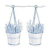 Lavender in pots. Vector illustration on white background. Decorative home plant