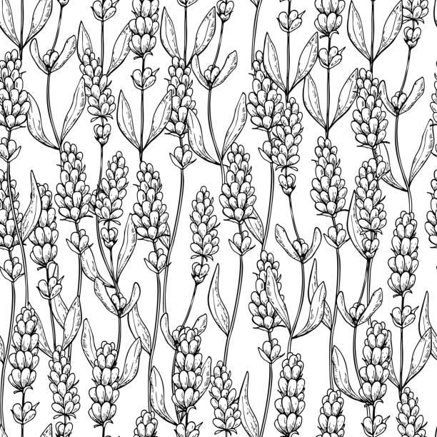 bildbanksillustrationer, clip art samt tecknat material och ikoner med lavendel vektor ritning sömlösa mönster. isolerade vilda blommor och blad. - lavender engraving