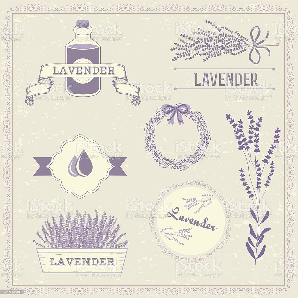 Lavender vector art illustration