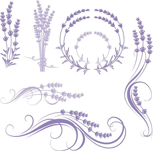 lavender  lavender color stock illustrations