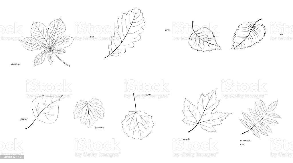 laves of trees vector art illustration