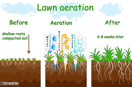 Gardening grass lawncare, landscaping, lawn grass care service. Illustration for article, infographics or instruction. Stock vector