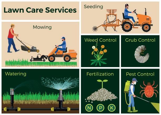 illustrations, cliparts, dessins animés et icônes de soins de la pelouse - plante sauvage