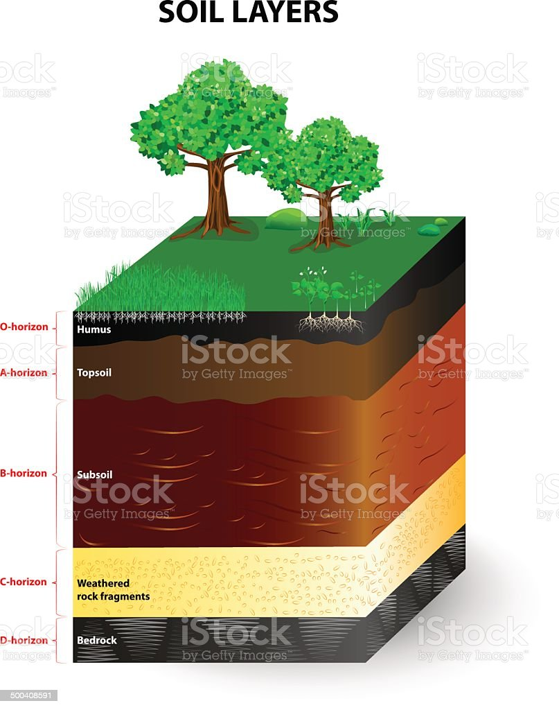 layers of a soil profile vector art illustration