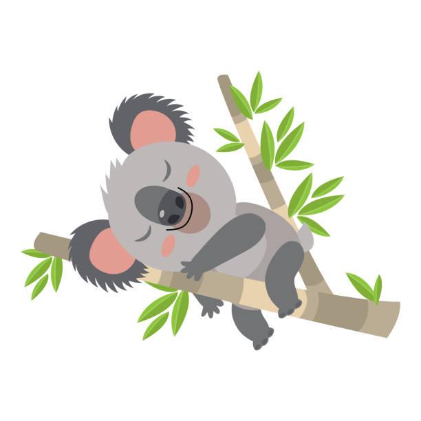 faul koala schläft auf einem zweig-cartoon-vektor-illustration. tier von australien. - faul ast stock-grafiken, -clipart, -cartoons und -symbole