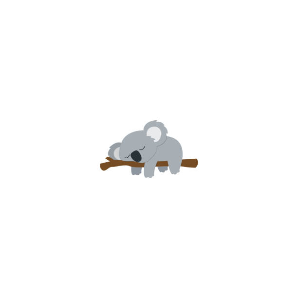 lazy koala sleeping on a branch flat design, vector illustration - koala stock illustrations