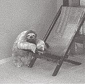 Etching illustration of a happy, lazy three toed sloth relaxing on chair indoors.