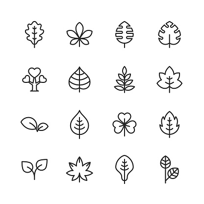Leaf and Plant Line Icons. Editable Stroke. Pixel Perfect. For Mobile and Web. Contains such icons as Leaf, Plant, Nature, Environment, Ecology, Oak, Palm, Maple, Pine.