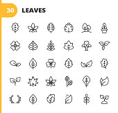 30 Leaf and Plant Outline Icons. Leaf, Plant, Nature, Environment, Ecology, Oak, Palm, Maple, Pine, Tree, Climate Change, Flower, Hemp, Laurel, Seed.