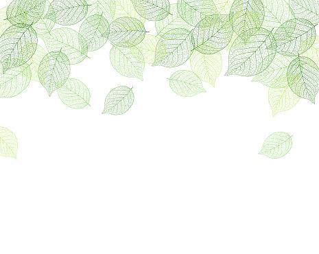 Leaf Background Material — стоковая векторная графика и другие изображения на тему Ботаника