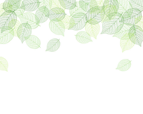 Leaf background material Leaf background material leaf stock illustrations