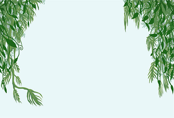 royalty free jungle vines clip art vector images illustrations