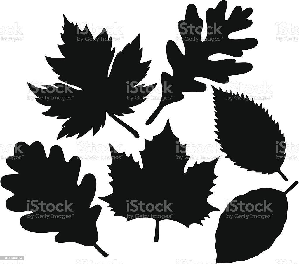 Leaf Collection vector art illustration