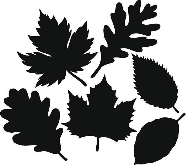 Leaf Collection Leaf Collection oak leaf stock illustrations