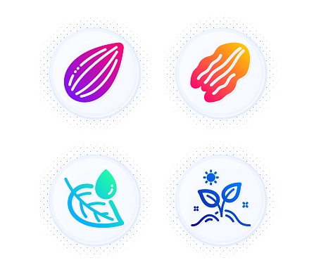 Leaf dew, Almond nut and Pecan nut icons set. Grow plant sign. Water drop, Vegetarian food, Leaves. Nature set. Vector