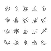 Leaf flat line icons. Plant, tree leaves illustrations. Thin signs of organic food, natural material, bio ingredient, eco concept. Pixel perfect 64x64. Editable Strokes.