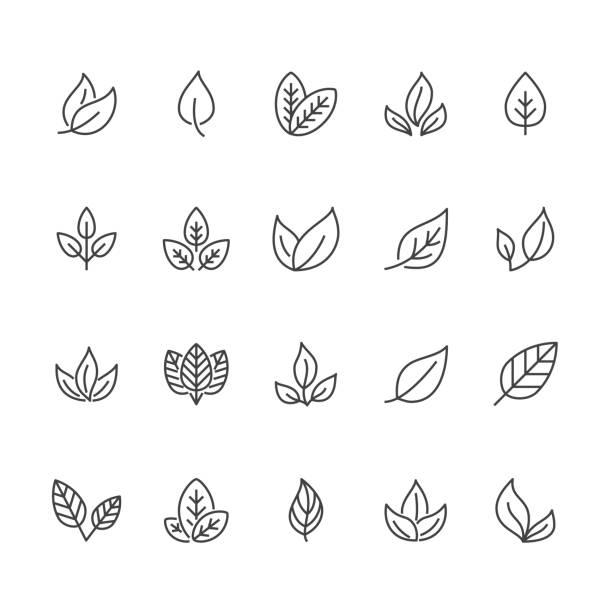 葉扁線圖示。植物, 樹葉子例證。有機食品、天然物質、生物成分、生態概念等。圖元完美64x64。可編輯筆劃 - 大自然 幅插畫檔、美工圖案、卡通及圖標