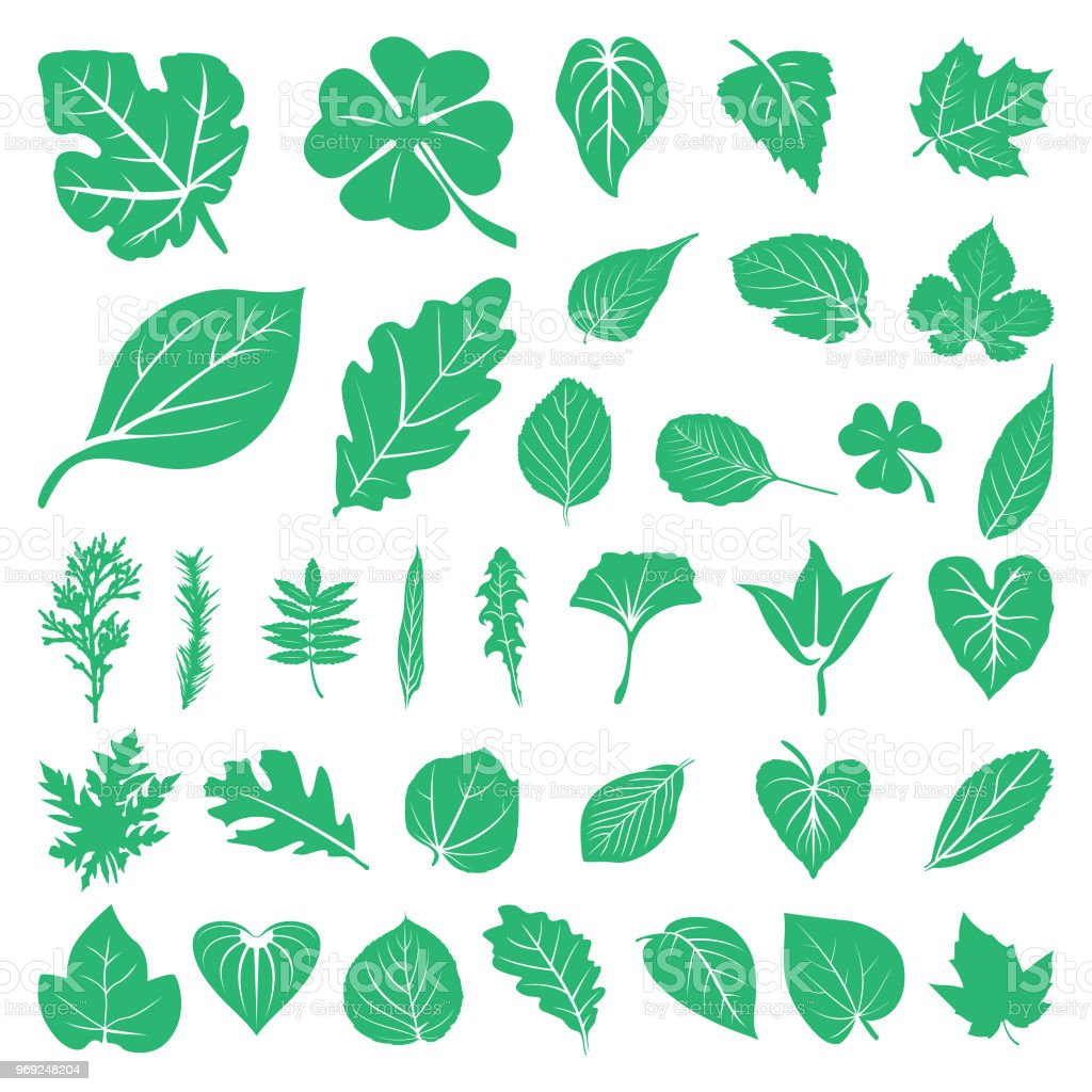 Leaf Foliage Green Ecology Nature Set
