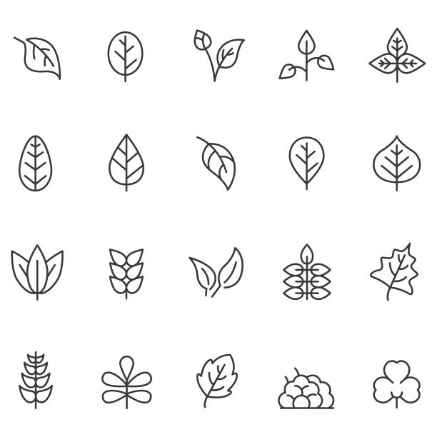 illustrazioni stock, clip art, cartoni animati e icone di tendenza di leaf icon set - foglie