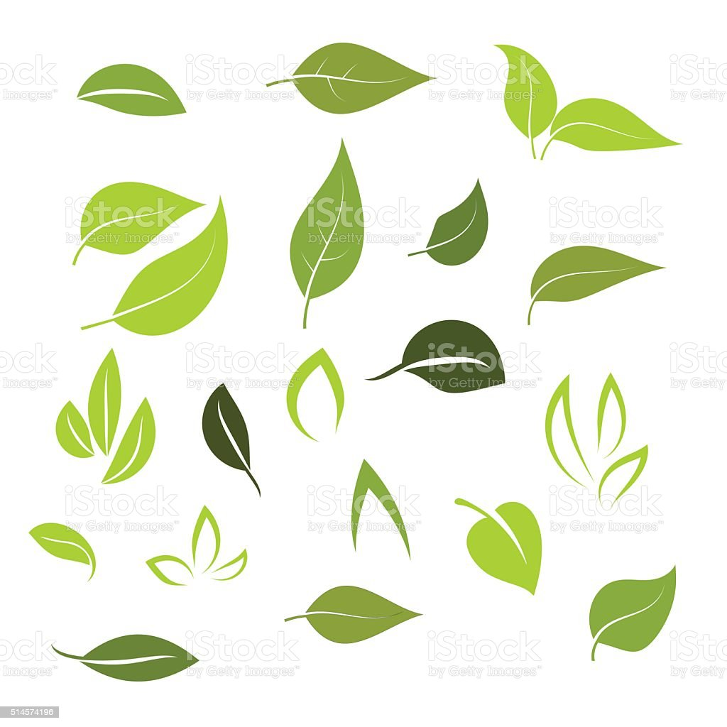 Leaf icon set vector vector art illustration