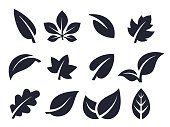 Leaf nature icons and symbols collection.
