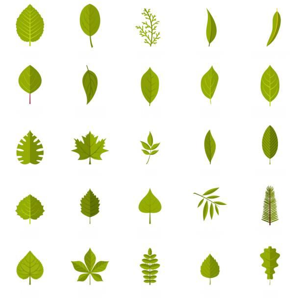 Leaf icons set, flat style Leaf icons set. Flat illustration of 25 leaf vector icons isolated on white background oak leaf stock illustrations