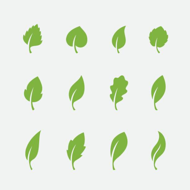 leaf icons set on white background - vegetarian stock illustrations, clip art, cartoons, & icons