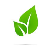 Eco icon green leaf vector illustration isolated. , Eco , design template elements