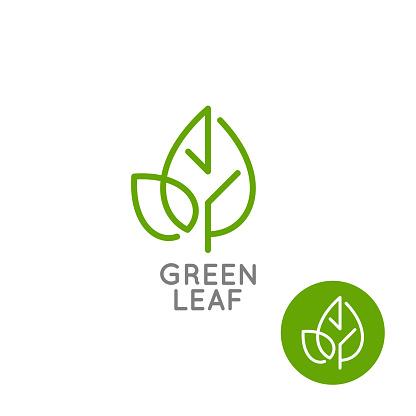 Leaf logo concept. Green leaf line on white background