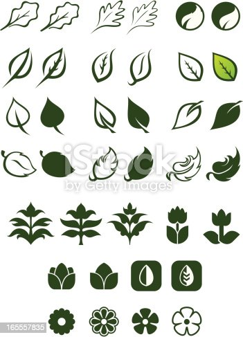 Vector Illustration of a variety of leaves. This is set 2 of 3.